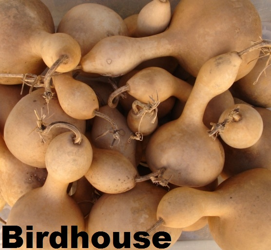 bird house vitrine